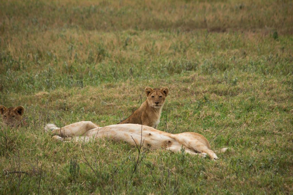Crater + South Serengeti - Screen-18
