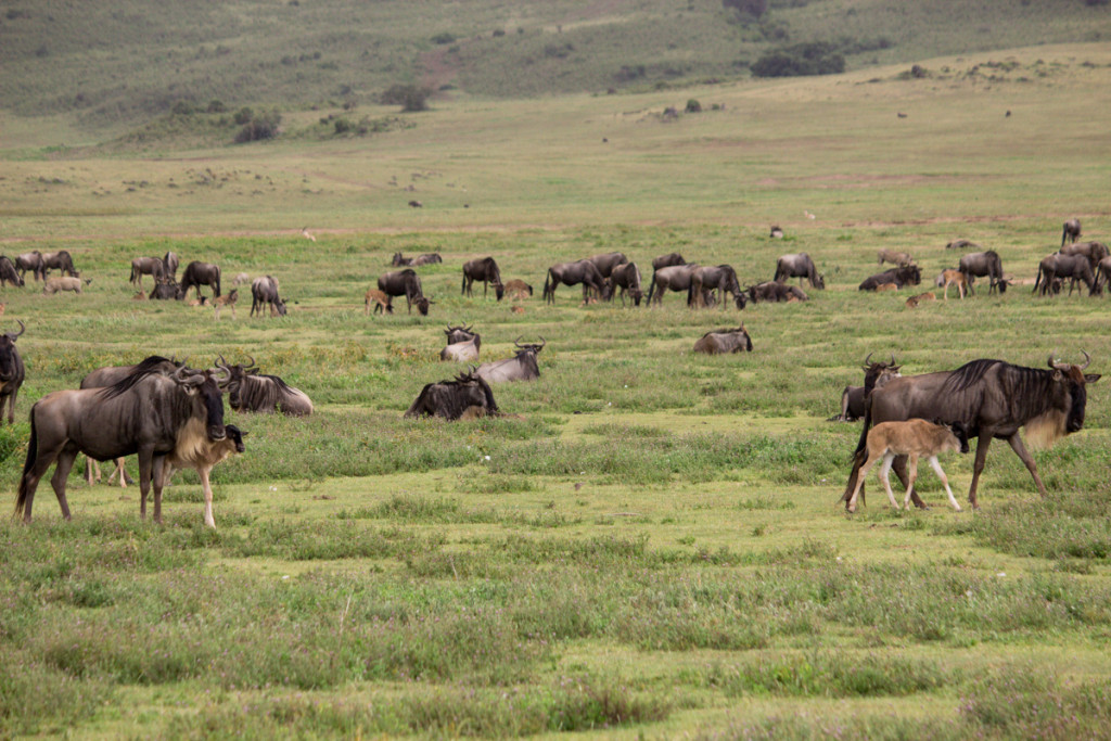 Crater + South Serengeti - Screen-20