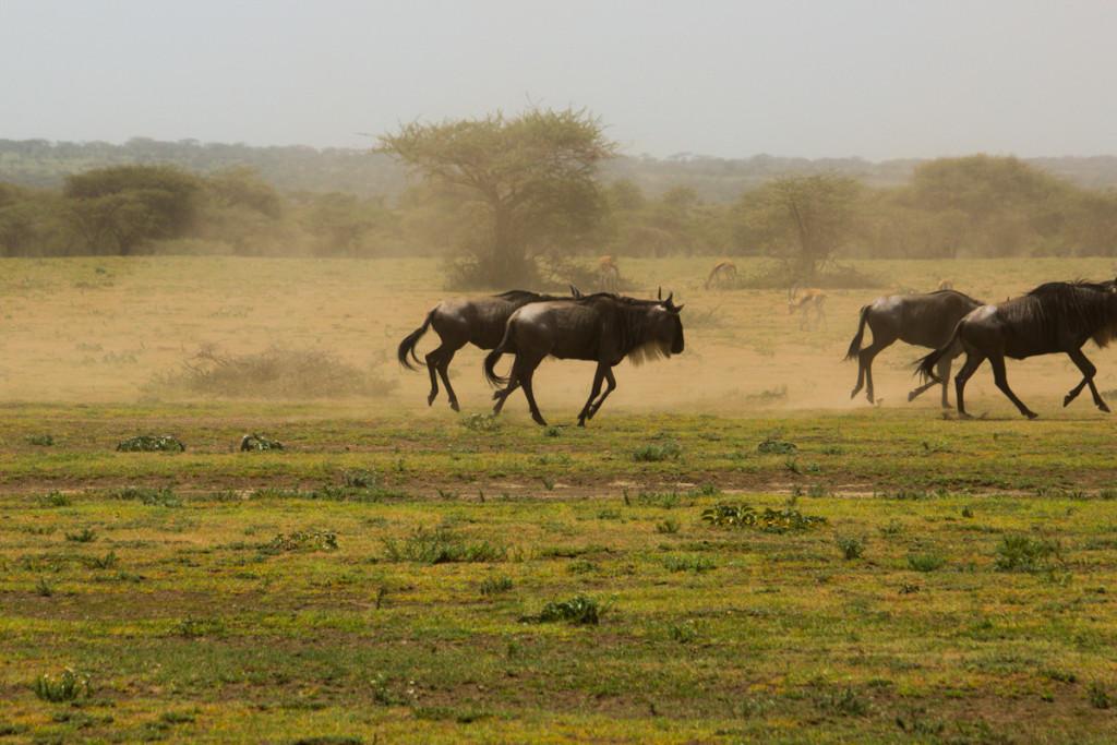 Crater + South Serengeti - Screen-31