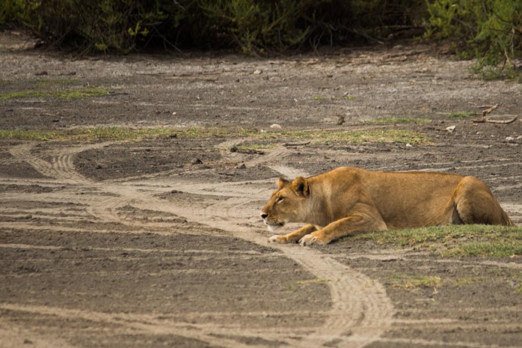 Crater + South Serengeti - Screen-62
