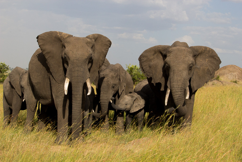 N Serengeti and Zanzibar - Web -11