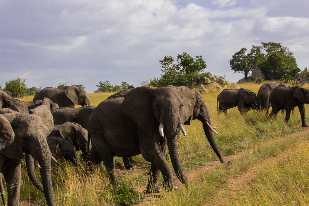 N Serengeti and Zanzibar - Web -12