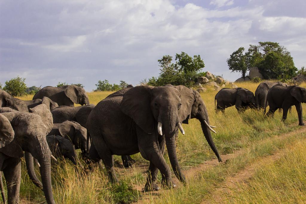 N Serengeti and Zanzibar - Web -12