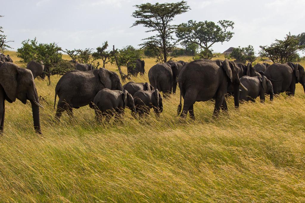 N Serengeti and Zanzibar - Web -16