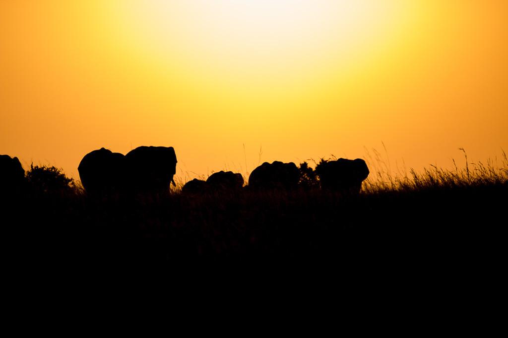 N Serengeti and Zanzibar - Web -20