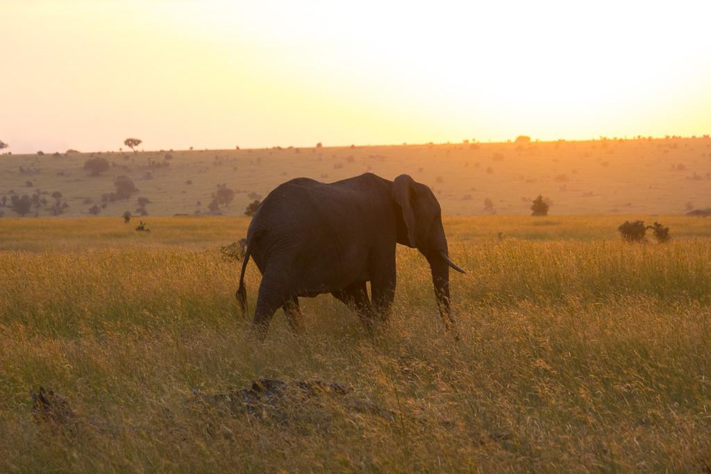 N Serengeti and Zanzibar - Web -25