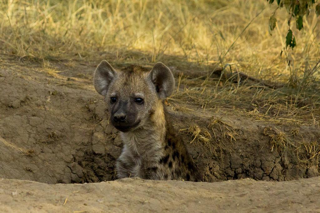 N Serengeti and Zanzibar - Web -35