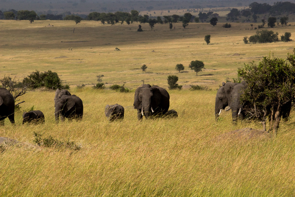 N Serengeti and Zanzibar - Web -5